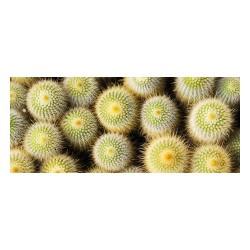 Tapis vinyle - Cactus