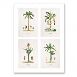 Affiche 4 plantes botaniques