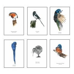 6 Affiches Oiseaux