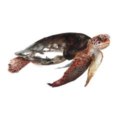 Affiche Tortue marine