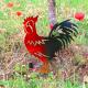 Figurine à planter - Coq noir ou rouille