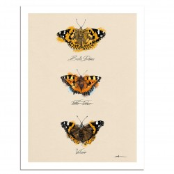 Affiche - Papillons