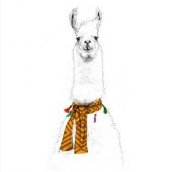 Affiche Lama du Pérou